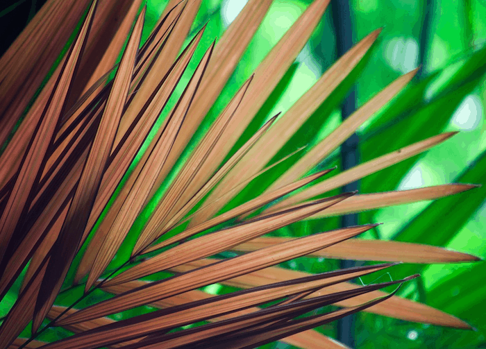 palm-fronds
